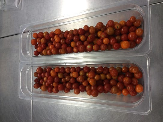 Fresh cherry tomatoes from the D.C. Everest Middle
