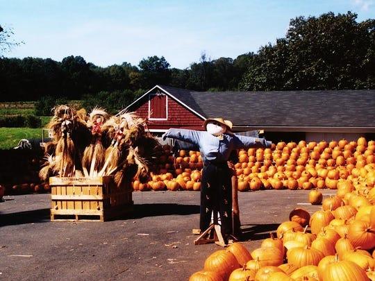 Daily Record Harding Township Pumpkins