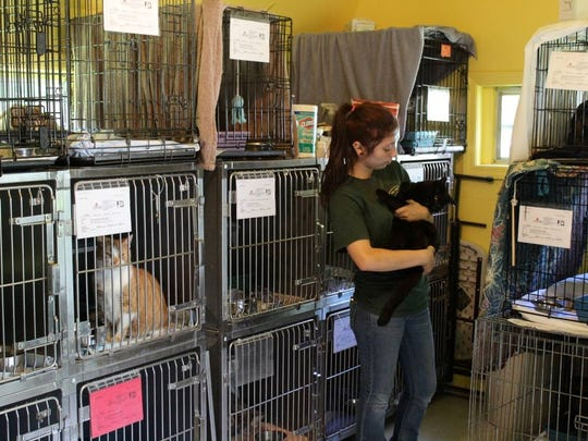 A photo last year of the cattery at the Hi Tor animal shelter