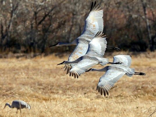 trio-cranes