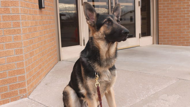 In this 2016 file photo, K-9 Clint sits in front of the Alamogordo Police Department. Last year APD won $5,000 from Aftermath Services to start their K-9 unit and are currently seeking online votes to secure a second win.