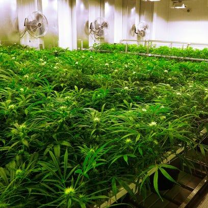 Marijuana crackdown may affect Guam
