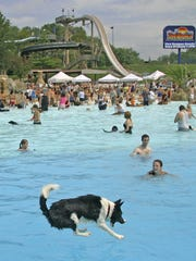 Lakai the dog, owned by Dalton Steadman of Loveland, dives in the pool.