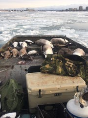 Waterfowl hunter Rod Ruogus uses an airboat on the
