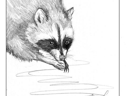 TOS_Raccoon_washing