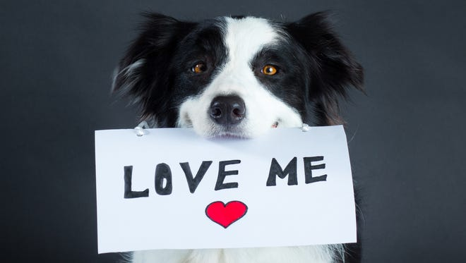 The Maricopa County Animal Care & Control is waiving adoption fees for most animals from 6 p.m. to 8 p.m. Wednesday, Feb. 15, at its shelters in Phoenix and Mesa.