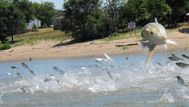 IJolted by an electric current from a research boat, Asian carp jump from the Illinois River near Havana, Ill., in June 2012. Michigan officials are seeking ideas from the public on ways to keep the invasive species from entering the Great Lakes.