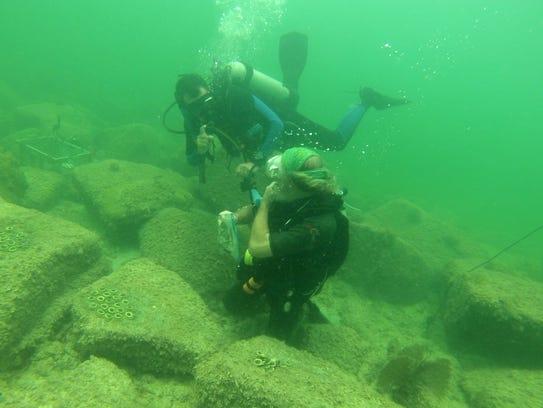 Mote Marine Laboratory scientist David Vaughan works