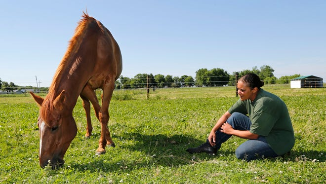 """Jamie Showers looks on Friday as Little Bit, a 6-year-old female, grazes on grass and clover at Indiana Horse Rescue Central, 916 Prairie Ave. in Frankfort. The horse, which was rescued from a Tippecanoe County farm in an emaciated state two months ago, is doing well. Showers estimates Little Bit has gained about 250 pounds since arriving at Indiana Horse Rescue Central. """"Another 50-100 lbs. and she'll look fantastic,"""" said Showers, who is facility manager. Animal control is preparing to file a report recommending charges be filed against the former owner of the horse."""