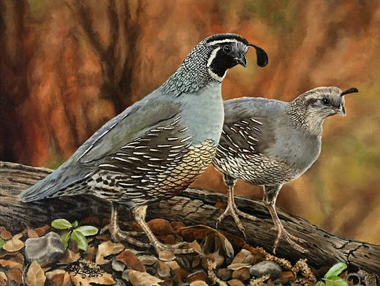 "Roby Baer's oil painting ""Valley Quail."""