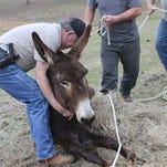 Jason Smith of Cascilla, Miss. was charged in the starvation of his six donkeys, including five that died.