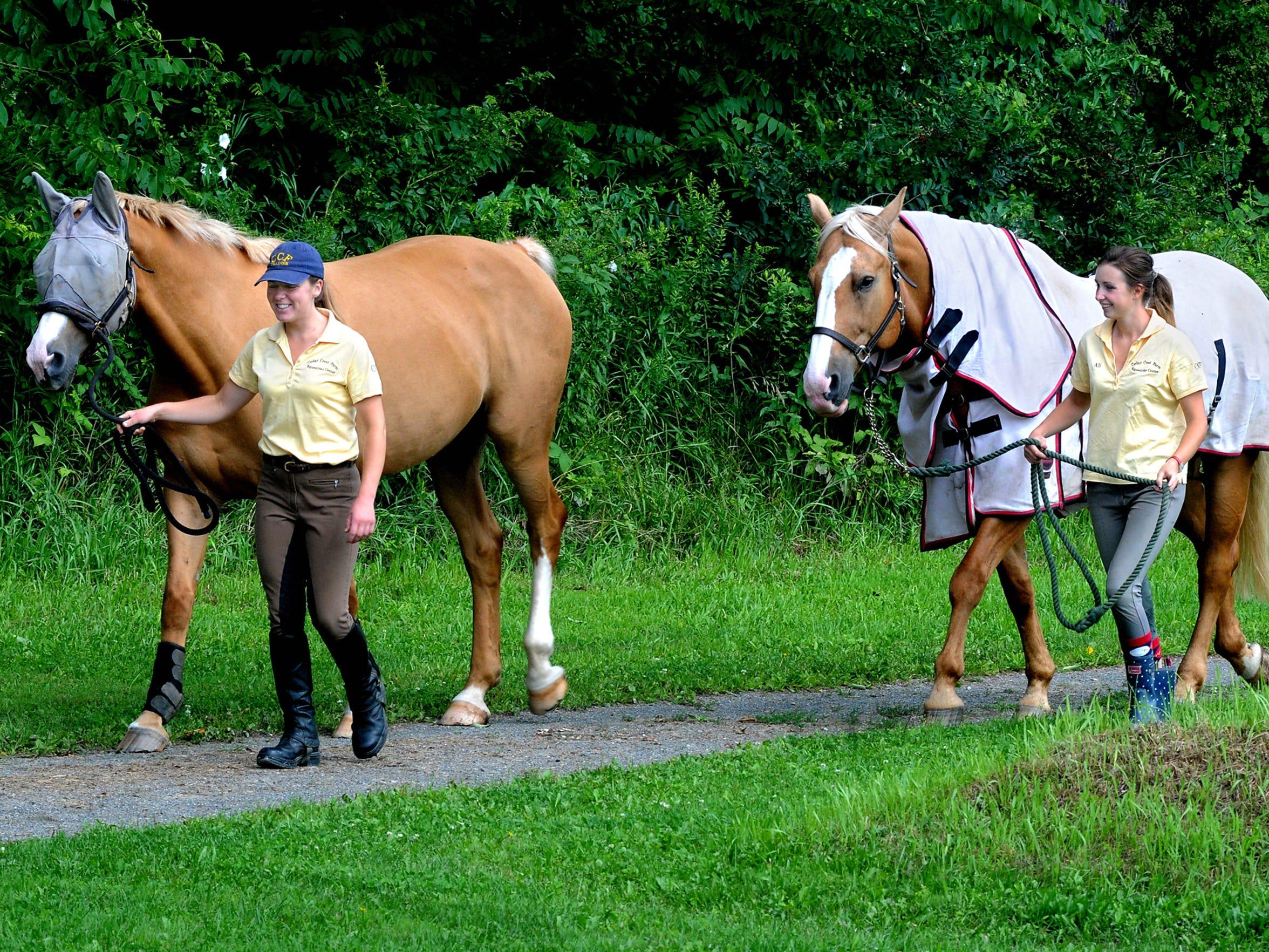 Lyme Horses Walk
