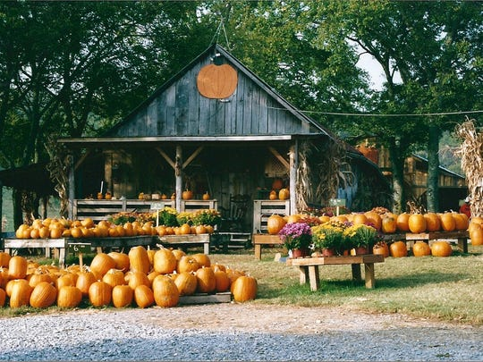 Walden Farm offers pumpkins galore, along with hayrides and other farm activities.
