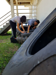 Elodie Vajda, Zika Response and Preparedness Project Regional Entomologist and Environmental Public Health Officer James Cruz look for mosquito larvae in tires.