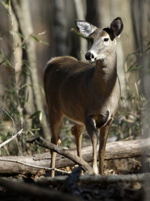 The deer and elk populations in Tennessee could be threatened by chronic wasting disease, which is now in Arkansas and 23 other states.