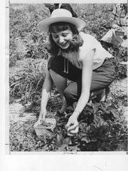 June Lehue fills a container with strawberries at the