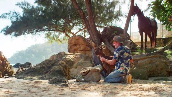 Veterinarian Dr. Scott Sims examines a goat on the shore near his facility at Kilauea on the island of Kauai in Hawaii.