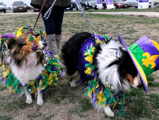 Shelties Macy (left) and Max arrive in costume at the 2015 dog parade at Camp Barkeley Dog Park.