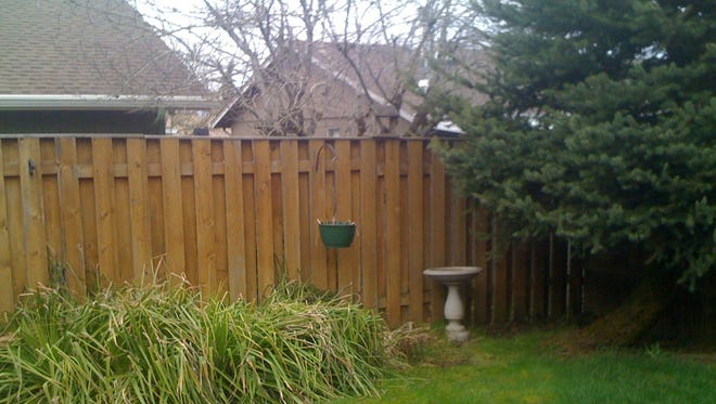 The fence that Don Hill built — and the Colorado spruce that was planted in 1984.