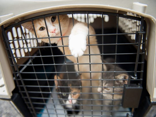 Dogs and cats from South Carolina shelters affected