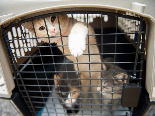 Dogs and cats from South Carolina shelters affected by Hurricane Irma were transported to Young-Williams Animal Center on Tuesday, Sept. 12, 2017.