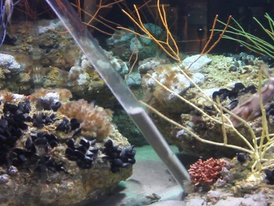 A man-powered hydro-vacuum cleans fish tanks in the