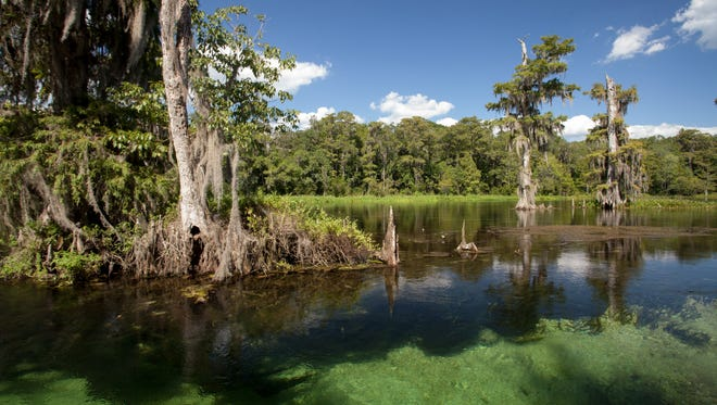 The Wakulla Springs features hiking trails, bout tours and a high dive.