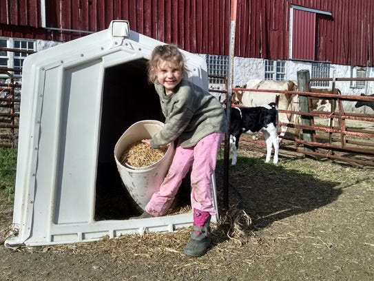 Vivian Lichty, 7, loves her family's Registered Holsteins
