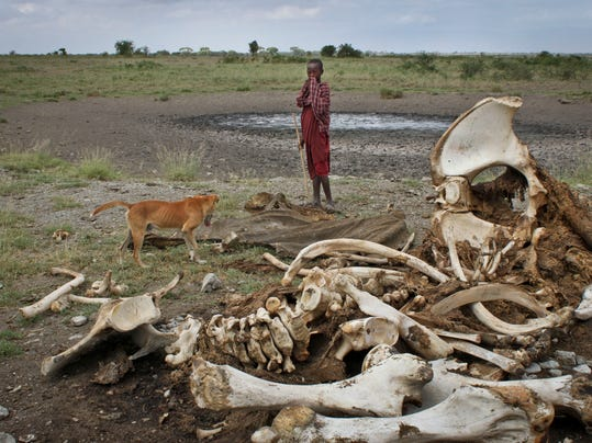 Africa Elephant Slaughter