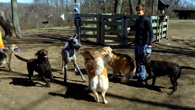 Carrie Eheman, of Covington, is surrounded by dogs as she arrives at a dog park in Mount Airy Forest in 2004.