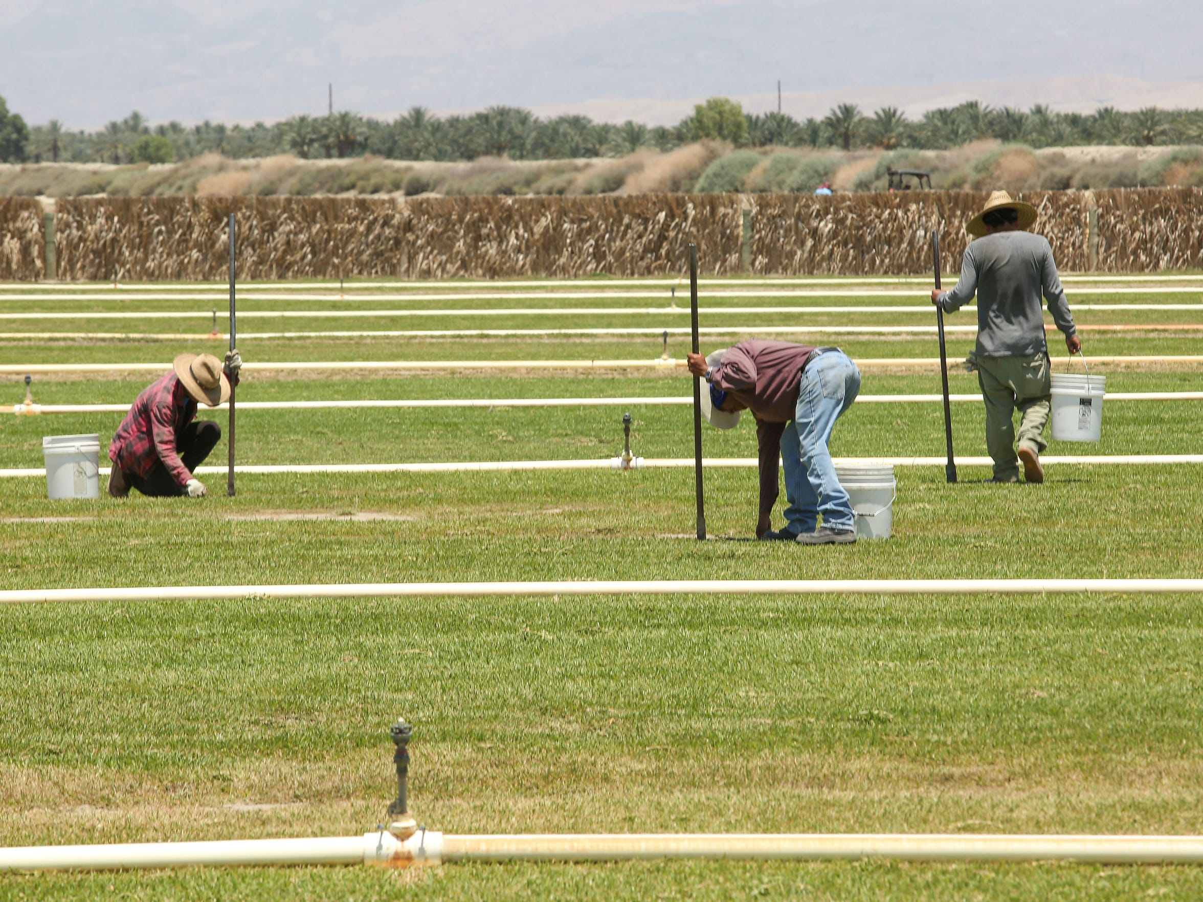 Workers labor on a sod field in Thermal on June 13, 2018.