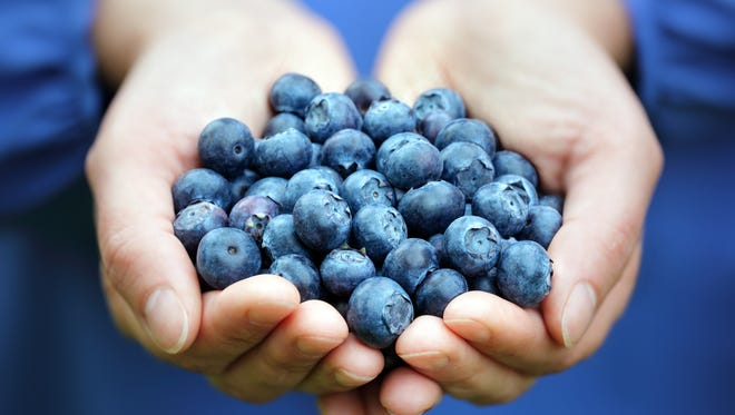 A gardening workshop focused on blueberries will go from 1-2 p.m. Monday, March 20, at Davis Family YMCA, 12133 S. Northshore Drive.