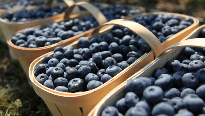 The blueberry crop is near perfection this year so set the alarm, get up early, pack a cooler and head to a nearby farm.