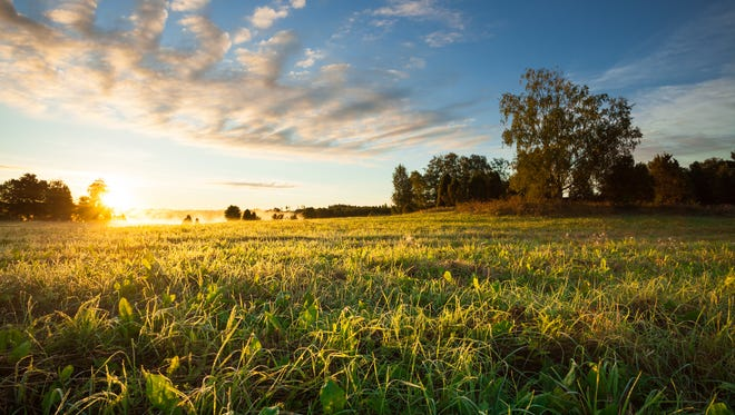 Serene landscape photo of trees and meadow at sunrise