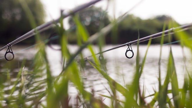 Carp fishing rods.