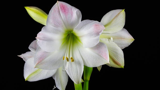 In the chill of winter, let blooms add indoor cheer