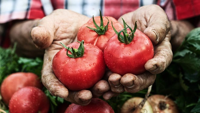 A tomato is a fruit as it develops from a flower and contains seeds.