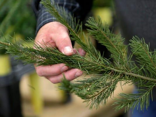 Christmas Trees Now W_Drak.jpg
