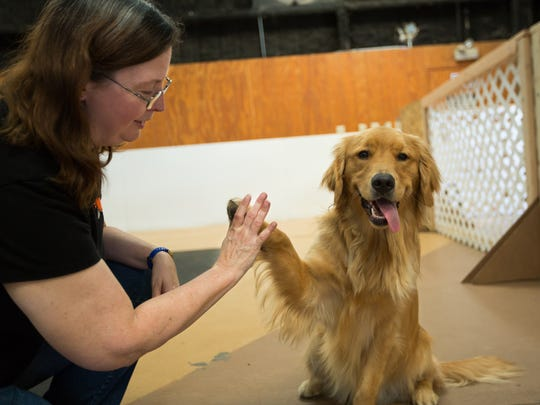 Owner of Your Pet Space Joy Jones gets a high five from Lou, July 20, 2016, a regular who attends Your Pet Space. Your Pet Space is a cage-free dog daycare and boarding facility.