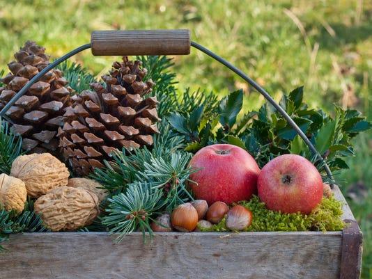 TCL winter fruit.jpg