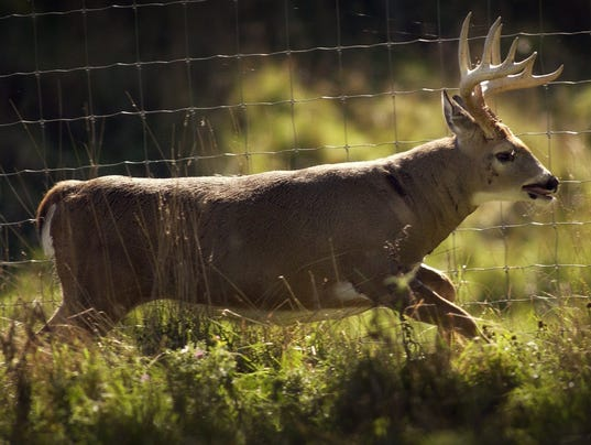 A buck runs along a fence in Florence Co.