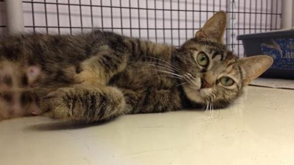 Angel is waiting to find the perfect family to love.
