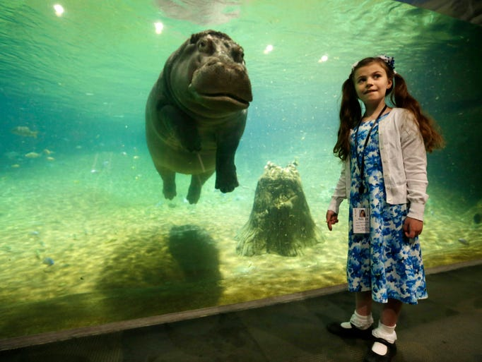 "Nine-year-old Audrey Bruben, of South River, N.J., gets a look from Genny, a 4,000 pound hippopotamus, as Adventure Aquarium opened a hippopotamus exhibit, ""Hippo Haven,"" Thursday, May 29, 2014, in Camden, N.J. (AP Photo/Mel Evans)"