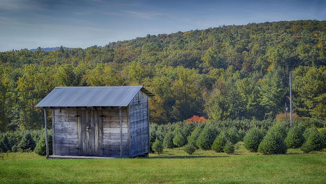 "Melanie Briggs of Carroll Valley submitted this photo to the Evening Sun Nature and Scenery gallery Oct. 29. Briggs writes, ""Tree farm in Orrtanna"""
