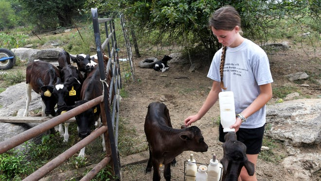 Sydney Lamb, 16, bottle feeds calves on her College Grove dairy farm on July 27. The Lamb family is in charge of the milk demonstrations at the Williamson County Fair.
