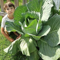 Williston student wins cabbage contest