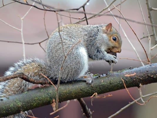 636168373774976531-LDN-DW-121116-squirrel.jpg
