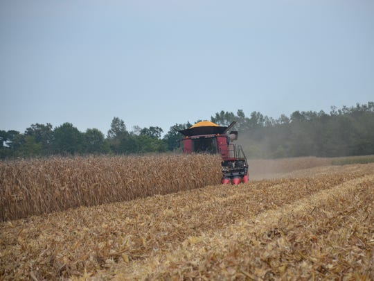 Corn is harvested at a Georgetown farm.