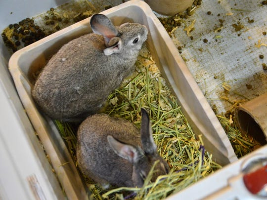These are two of the unnamed baby rabbits. Cranson