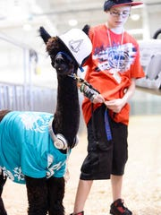 Sarah Otto, 15, of West York, with her alpaca dressed as L.L. Cool J, just after winning her division in the costume competition during the last day of the York Fair in September.  The Pennsylvania Farm Show will now feature alpaca competitions, such as costume contests.